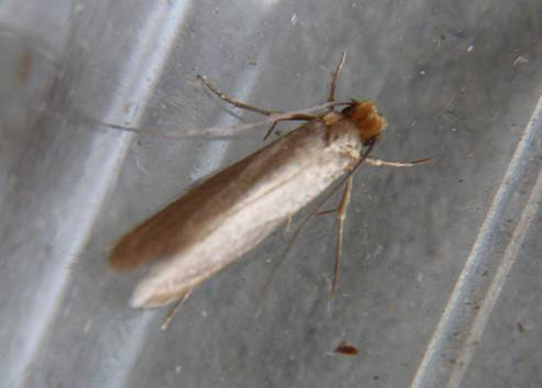 Image Gallery Tiny Moths